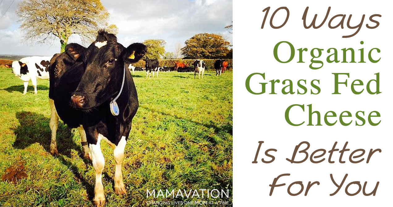The Top 10 Benefits of Organic Grass Fed Dairy Cheese